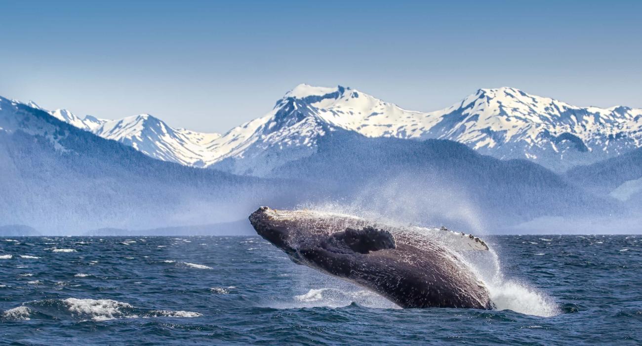 Glacier Bay National Park Visit The Usa